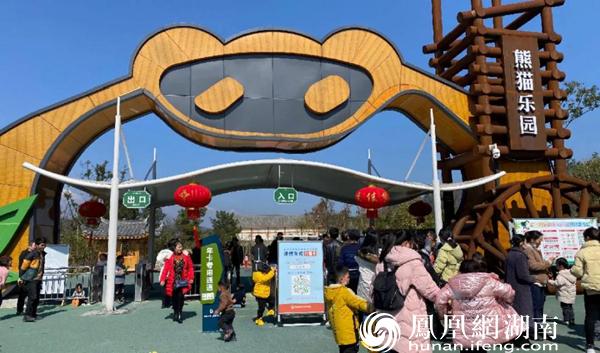 凤凰中华大熊猫苑内游客络绎不绝。