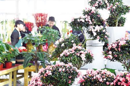 春节期间,市民来到新区农投花卉交易中心选购花卉。记者 丁凯 摄