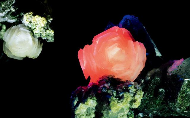(一块小巧的方解石,灰黑色的基岩上,方解石色泽洁白,形态宛若一朵精美的梨花。如果换上紫外光源,白色花朵瞬间呈现出粉红色和海棠花般的质感。刘新国 摄)