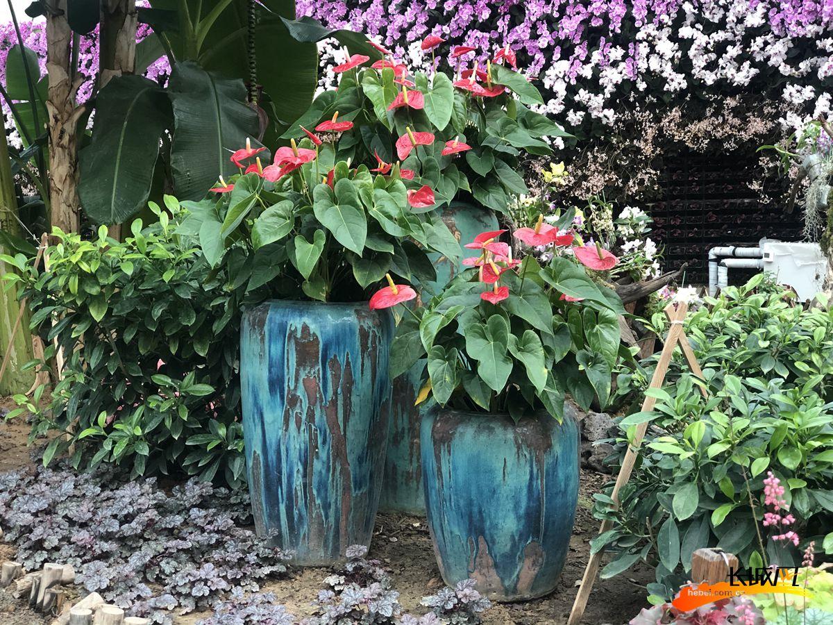 本次展览通过不同的容器与植物搭配,展现不同花卉的姿态与特色。