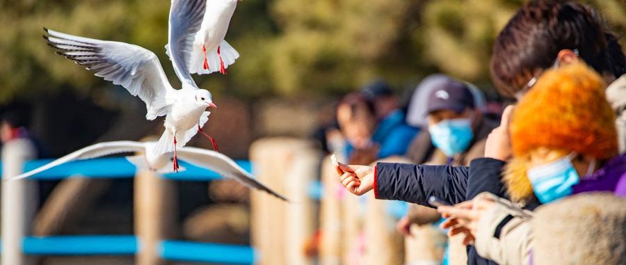 春节假期,年味十足 市南文化旅游晒出亮眼成绩单!