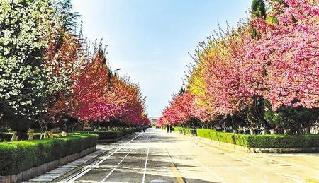 金徽酒文化生态旅游景区里的樱花路