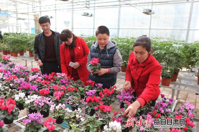 民乐县现代农业示范园花卉种植基地上,市民赏花、买花。