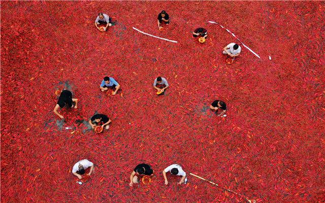 (湖南宁乡炭河古城举办的一场吃辣椒挑战赛,众多挑战者浸在漂满辣椒的冷水池里或满是冰块的冰桶中,进行吃辣椒比拼。杨华峰 摄)