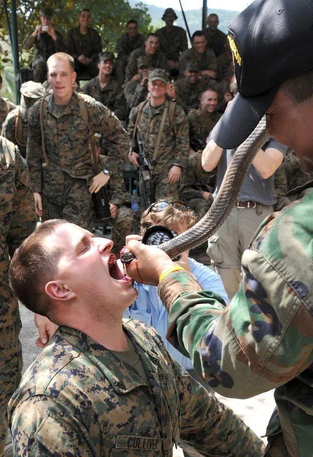 美国善待动物组织(PETA)表示,美军在演戏中吃活壁虎喝蛇血可能导致类似新冠病毒的流行病。