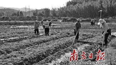 韶关仁化县农民正忙着春耕生产。南方日报记者 潘俊宇 通讯员 张怡 摄
