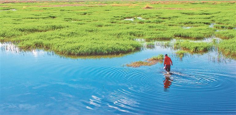 安达红旗泡湿地夏景。