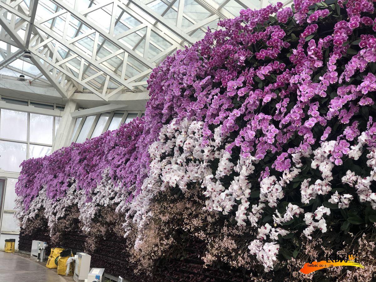 在展厅入口处,园艺师通过阴沉木和石斛、蝴蝶兰等植物结合,使游客能够更加深入地感受蝴蝶兰生长的状态。
