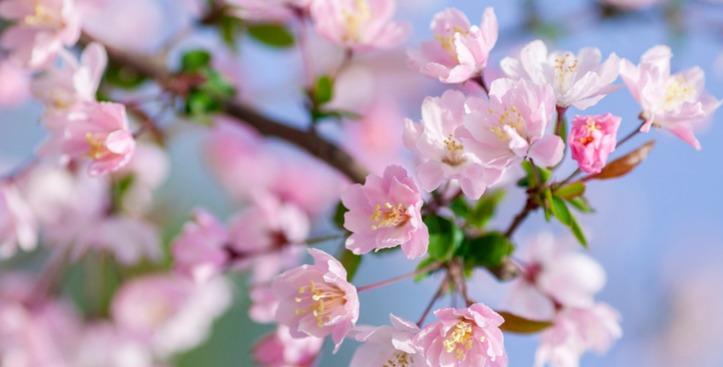 阳春三月,大地回春!这份李沧踏青赏花指南请收好