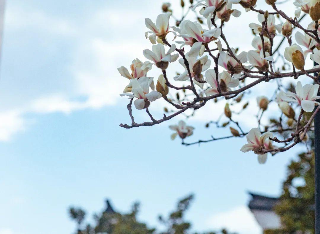 来乌镇吧,一起寻找浪漫而细腻的春天