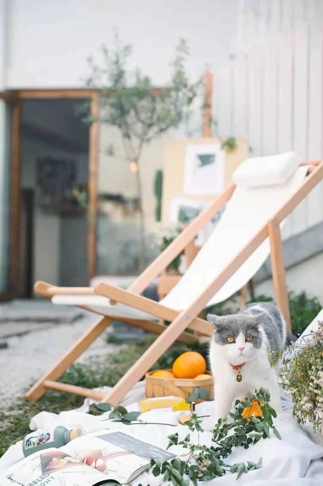 店里还有可爱的猫猫© 呵呵旅行手帐