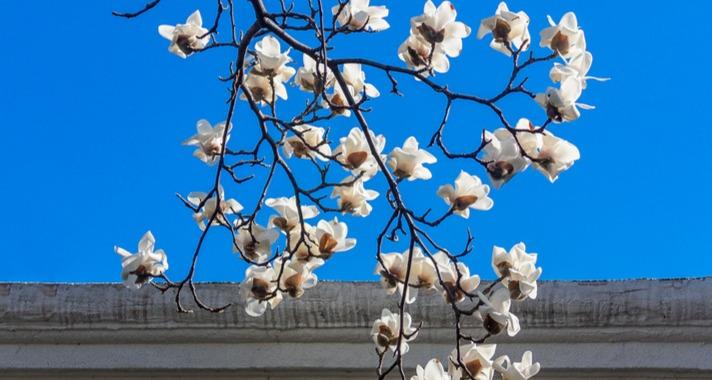 冬去春来,万物更新 在城阳,我们一起等春来