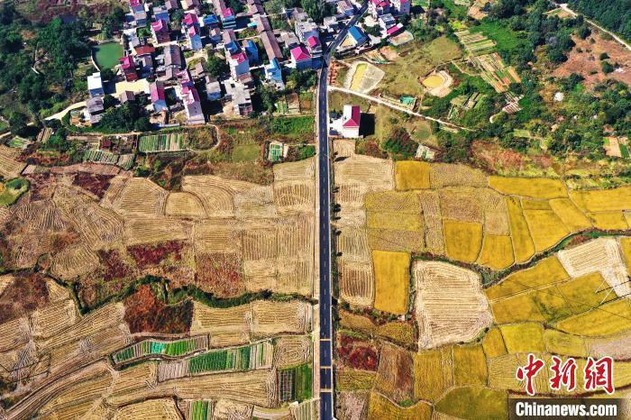 航拍位于江西省鹰潭市月湖区的X002县道(梅里路),农村公路穿梭金色稻田和秀美乡村,行走中的车流与乡村美景,构成一幅美丽的乡村动脉画卷。(资料图) 刘占昆 摄