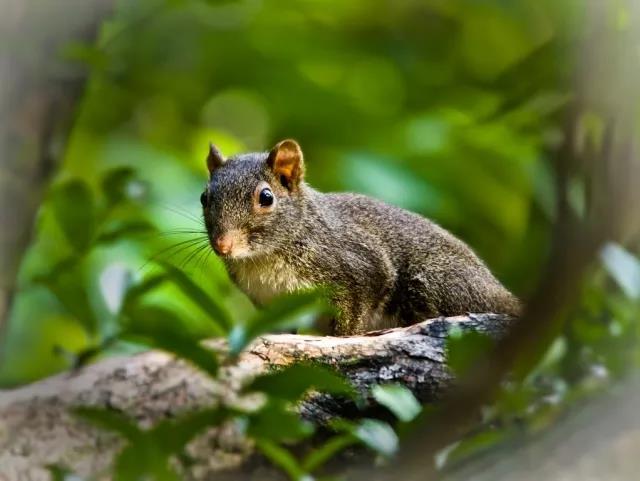 图8:野三坡松鼠