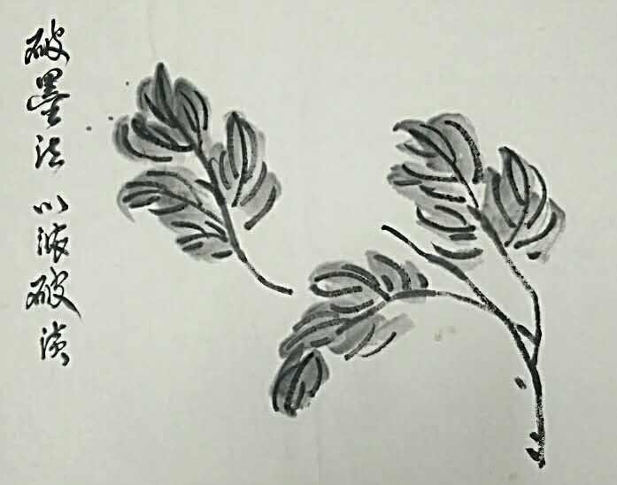 ▲泼墨法——以较多量不均匀的墨水,随笔挥泼于宣纸之上,但水份不能太多洒泼于纸,泼墨必须在墨色平中求不平,不平中求平(整体感)。