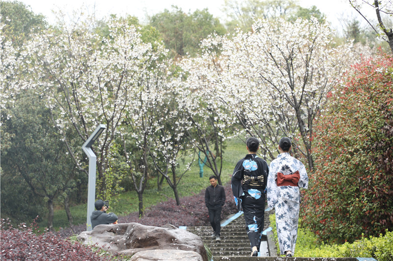 游客在园中赏樱游玩.JPG