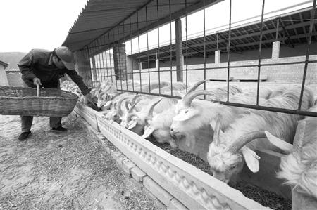 唐驳虎:治沙要帮蒙古种草?中国有更好的妙招!