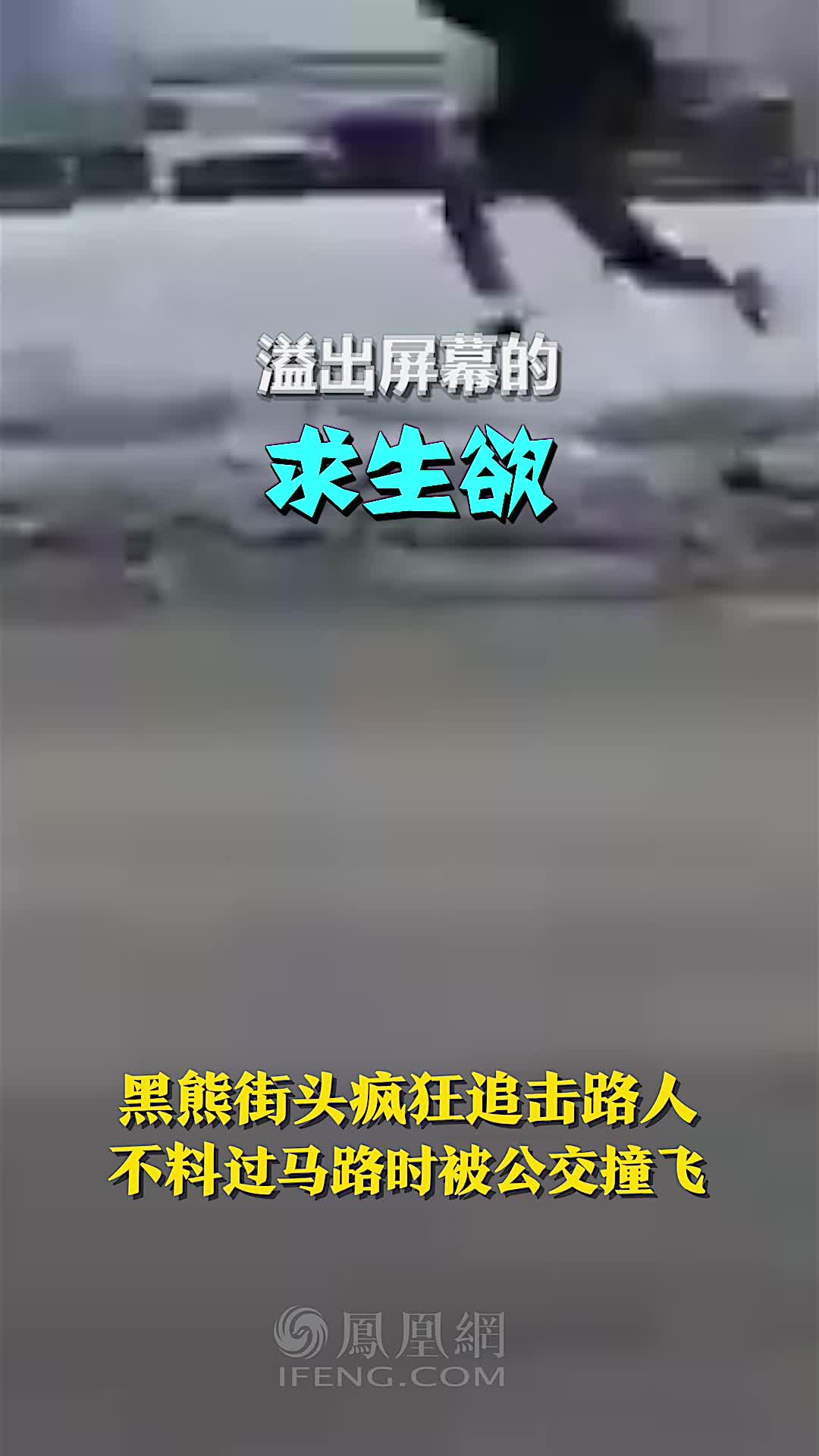 黑熊街头疯狂追击路人,不料过马路时被公交撞飞