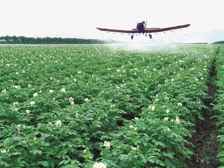 马铃薯种植基地飞机航化作业现场。本报资料片