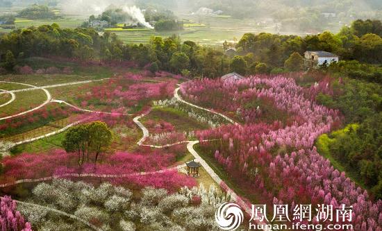 《春光明媚》——张庆久 摄于2021年3月13日