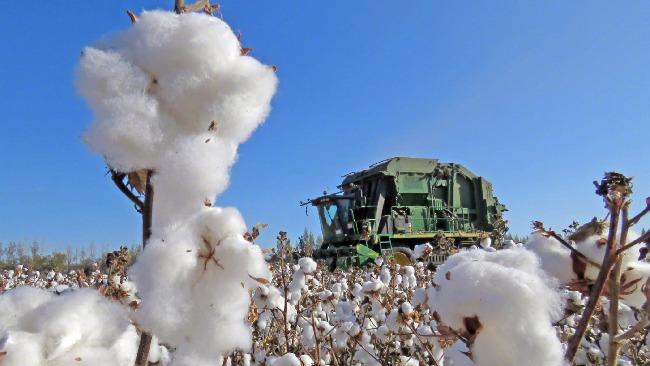 中国储备粮管理集团:新疆棉花中国自己还不够用