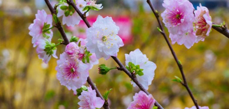 感受春天的气息 来青岛十梅庵公园赏梅花
