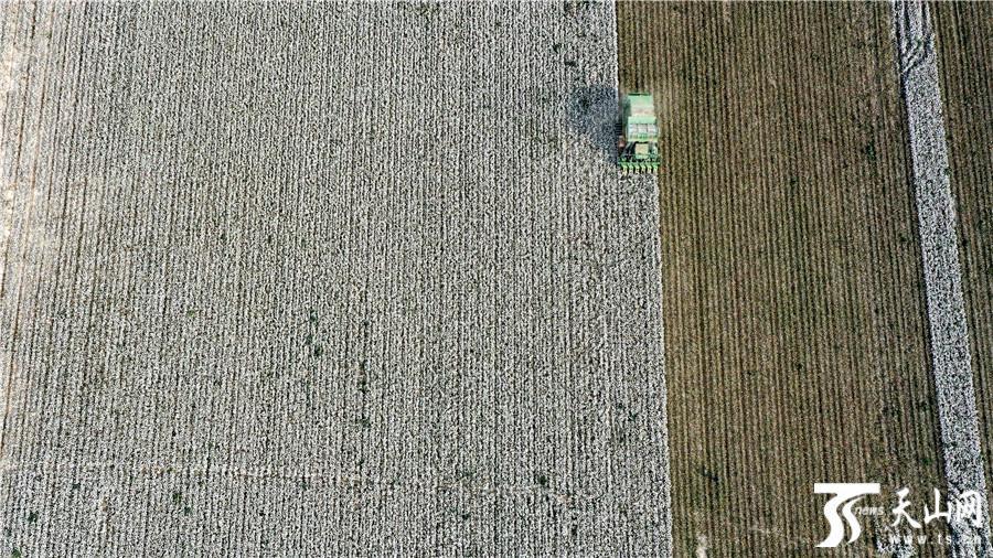 唐驳虎:新疆棉花有多重要?这条产业链绝不简单
