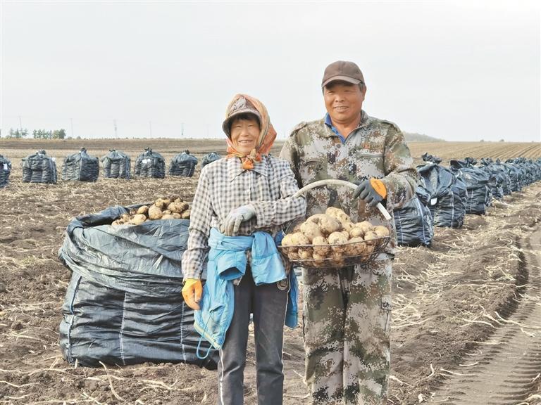 马铃薯种植基地秋季收获现场。本报资料片