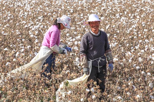 一位辛劳又快乐的采棉工人
