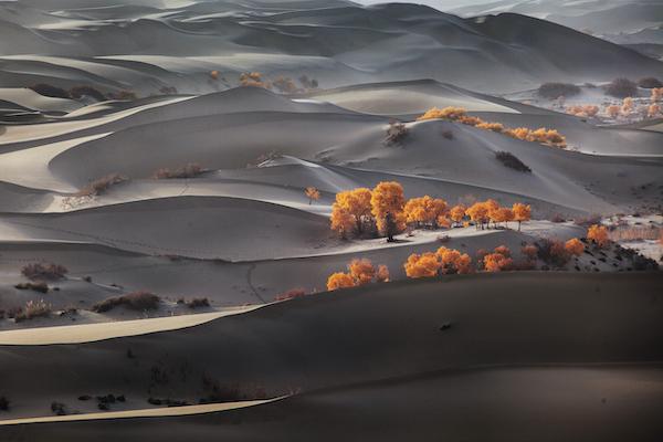 点缀着胡杨的沙漠