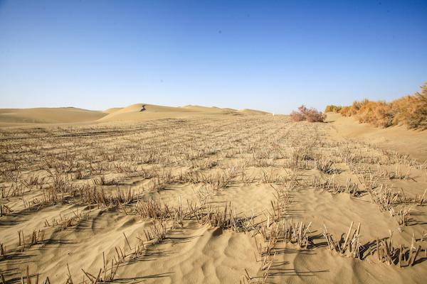 防风固沙的草方格 本文图均为 姚璐 摄