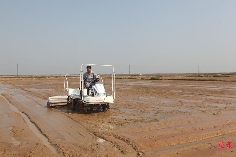 ▲播种机在农田里播种,采用的是直播技术。