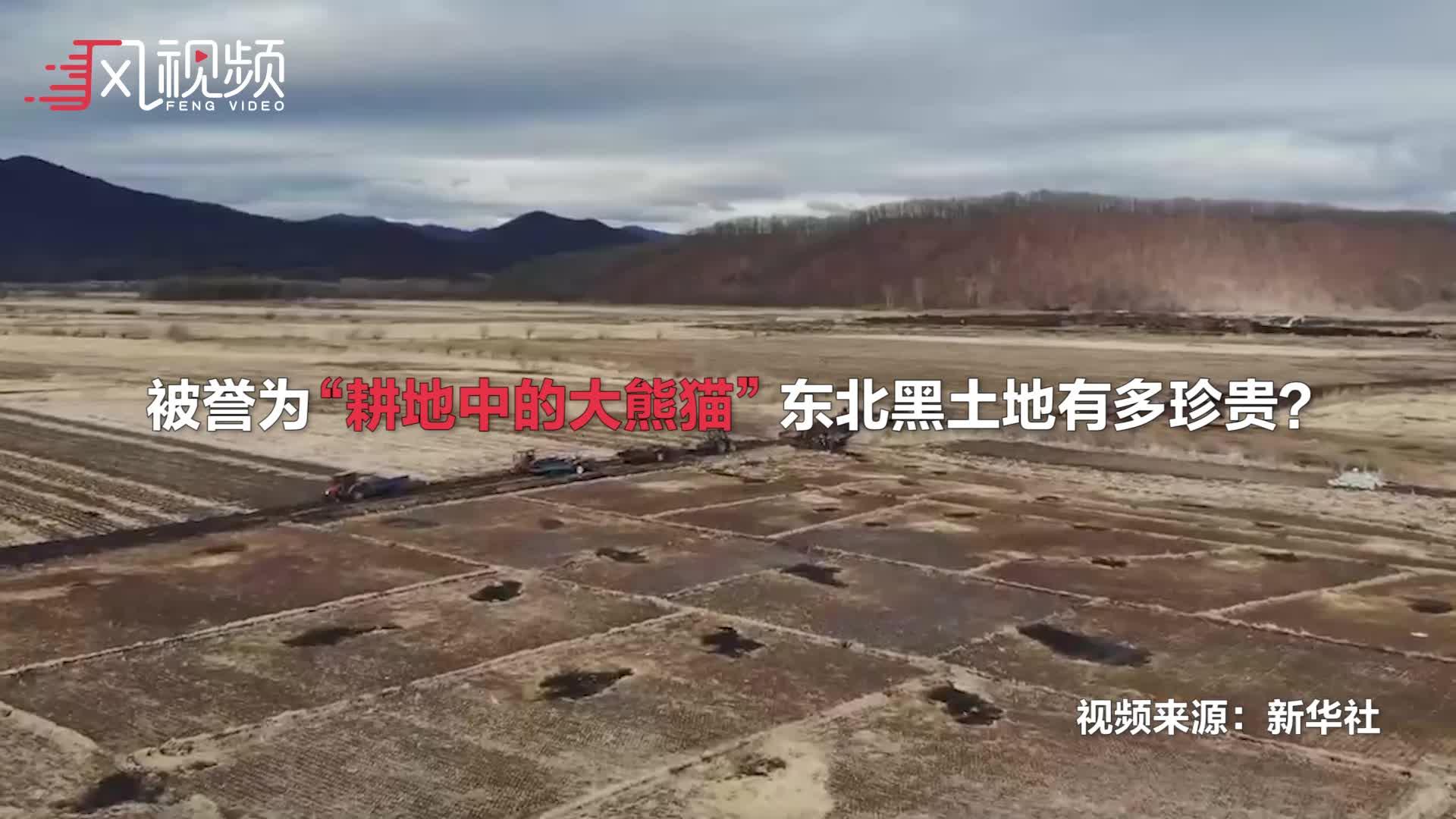 黑龍江9萬多平黑土地遭盜挖 專家:約400年才形成1公分 屬永久創傷