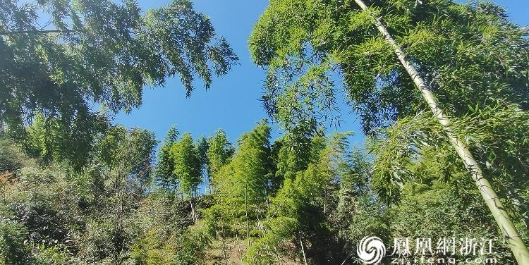 """春春悦动丨龙游:""""六春湖""""上遇见""""绿"""""""