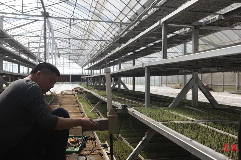 ▲南昌大田农社的一座育秧大棚内,一位东北来的师傅正在调试控温控湿设备。