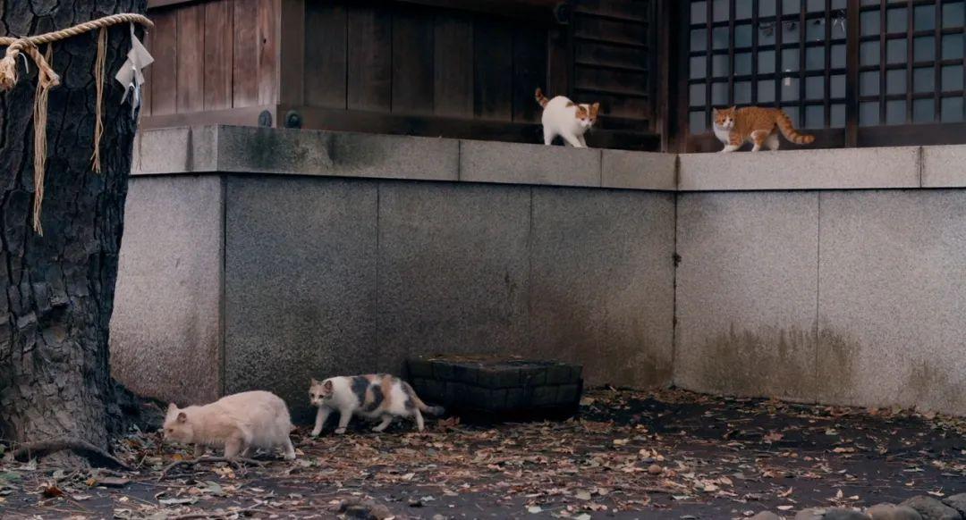 猫:我对为人类做有用的事从来不抱热情