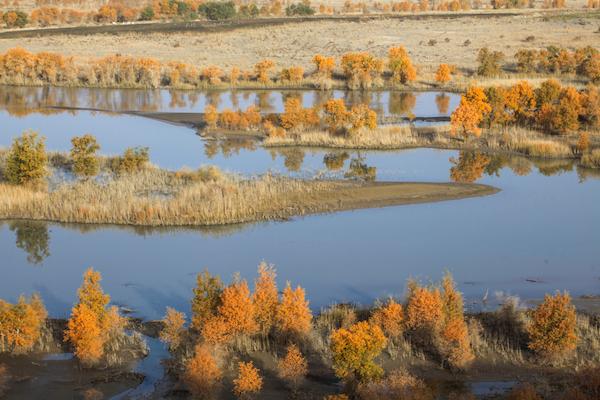 塔里木河上的胡杨林