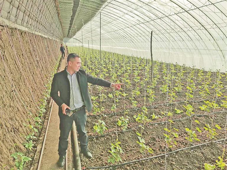 宋志忠介绍蔬菜生长情况。