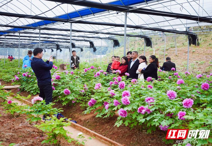 游客在花田厝鲜花艺术小镇赏花。