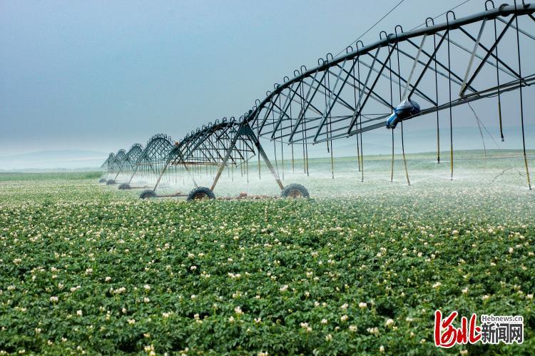河北省各地通过喷灌滴灌等措施减少地下水压采。 (资料片)河北日报记者赵红梅摄
