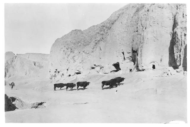 放牧人和牛群