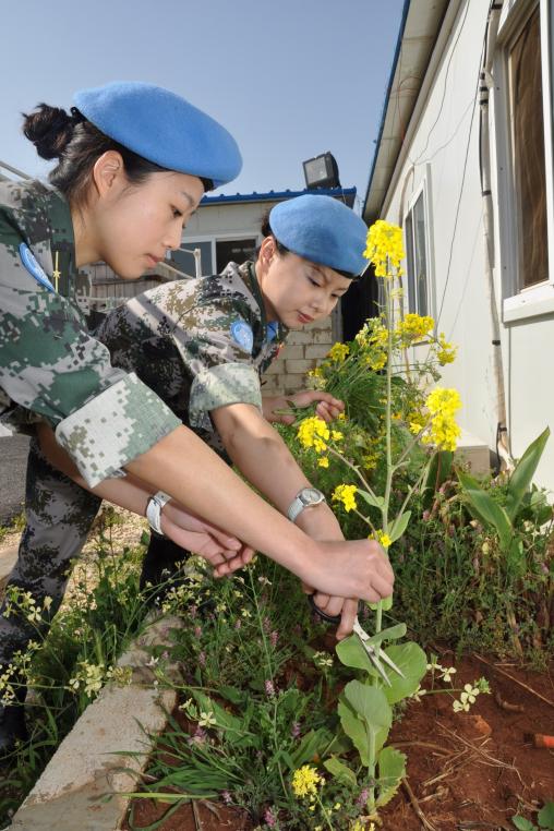 中国维和官兵采摘营地里的油菜花献给杜照宇烈士。(资料图)