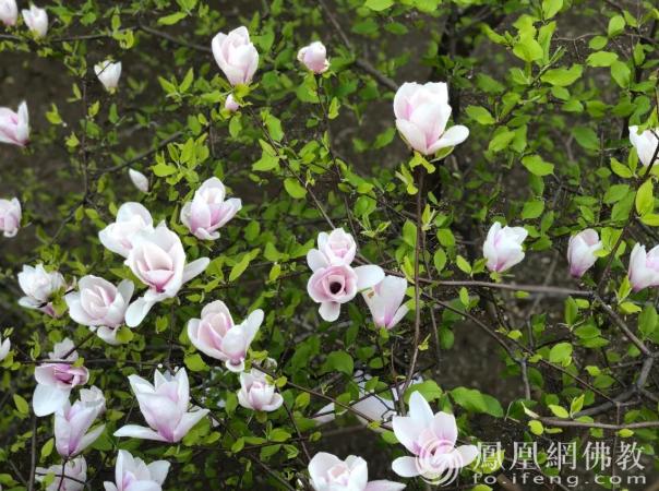 图片来源:凤凰网佛教 摄影:夏小蕾