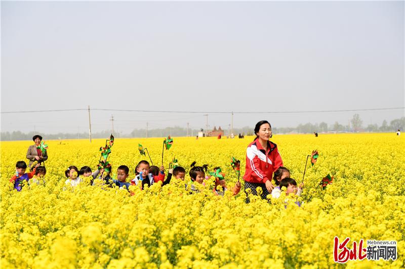 万亩油菜花盛开绽放,游客在花中畅游。通讯员苗凤强摄