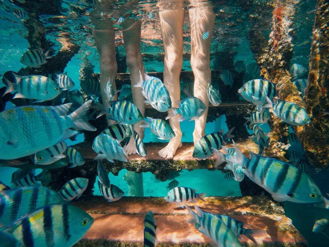 △以色列埃拉特凭借其海洋资源开发了诸多水下体验项目 。 /unsplash