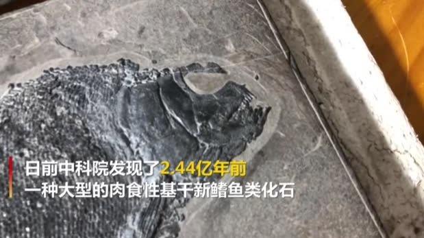 """贵州发现2.44亿年前的""""盘州暴鱼"""":粗犷凌厉且凶狠"""