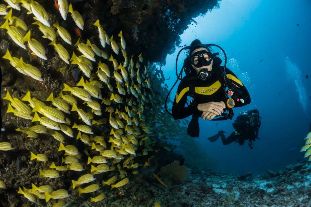 △潜水者与海底鱼群共处。 /unsplash
