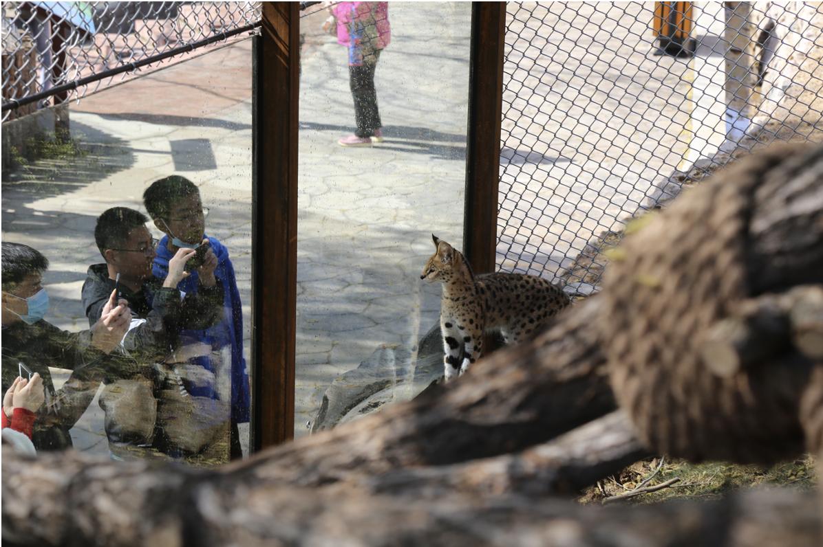 藪貓館、鳥語林、孔雀苑,青島森林野生動物世界全新館舍正式亮相清明節!