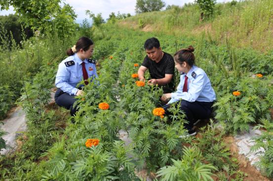 成縣稅務干部在萬壽菊種植基地宣傳稅收優惠政策