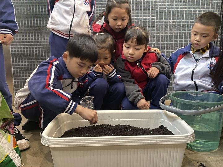 种棉花啦!今天,杭城这所小学的同学都是棉花种植者
